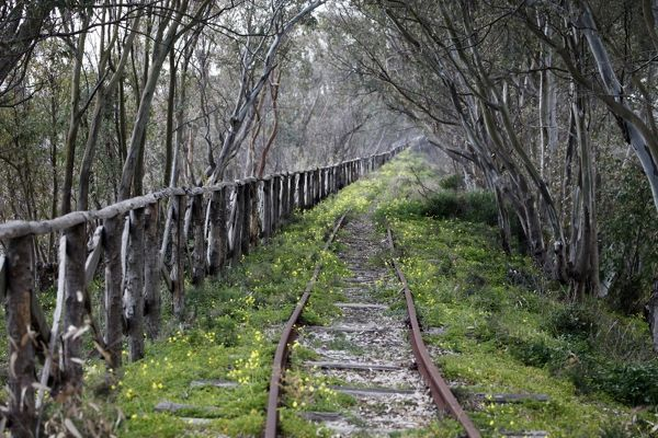 The tracks of a disused railway line running through trees in a wood near Selinunte, Sicily, Italy