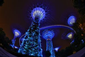 Blue lights of the futuristic Supertrees Grove, Singapore