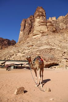 Camel beside rock formations of Lawrence's Spring in the desert at Wadi Rum, Jordan