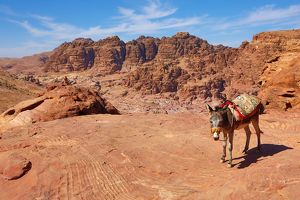 A donkey and view of sandstone rock formations overlooking the valley of the rock