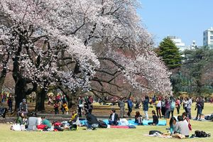 First Japanese Cherry Blossom in Tokyo brings out the crowds, Tokyo, Japan