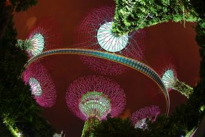 Futuristic Supertrees Grove, Gardens by the Bay, Singapore