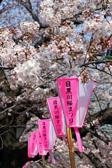 <b>Tokyo Cherry Blossom</b><br>Selection of 22 items