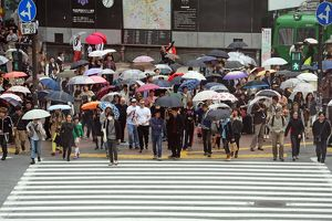 Japanese street scene showing crowds of people crossing the street with umbrellas