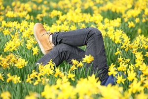 Legs amongst the Spring Daffodils in St. James Park, London