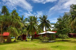 Palm trees at the Carp Island resort, Carp Island, Republic of Palau, Micronesia