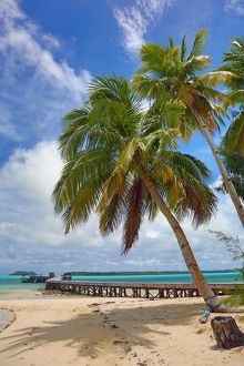 Palm trees on a tropical sandy beach, Carp Island, Republic of Palau, Micronesia