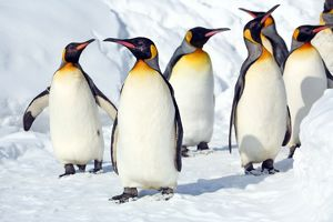 <b>Penguin Walk, Japan</b><br>Selection of 13 items