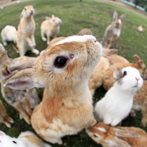 Rabbit Island, Japan (Selection of 18 Items)