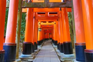 Red torii gate tunnel at Fushimi Inari Shinto shrine in Kyoto, Japan