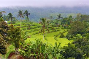 Rice terraces in Mekarsari, Bali, Indonesia