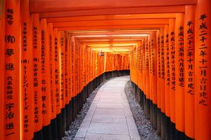 Senbon tunnel of Torii gates, Fushimi Inari shrine, Kyoto, Japan