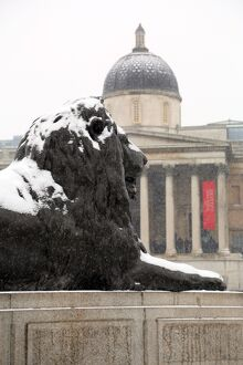 Snow on a lion and the National Gallery in Trafalgar Square, London