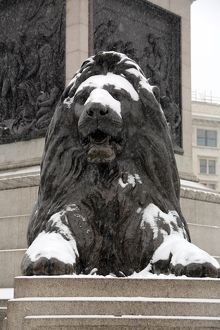 Snow on a lion in Trafalgar Square, London