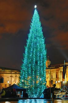 Trafalgar Square Christmas Tree lights switched on, London, England