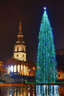 Trafalgar Square Christmas Tree, Trafalgar Square, London