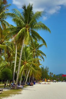 Tropical sandy beach with palm trees in Pantai Cenang, Langkawi, Malaysia