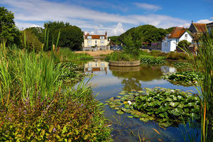 The Village Pond and the Elms in the village of Rottingdean, East Sussex, England